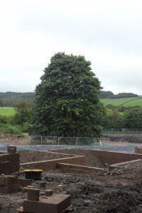 Tree - 20 Sept