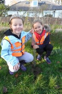 Mabel Wood Tree Planting - November 2013 (13)