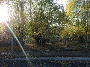 Pentland Reach Biggar - 21 Oct 2014 (2)