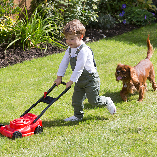 Top tips for looking after your lawn